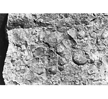 Brachiopod fossils from Usk, Monmouthshire Photographic Print