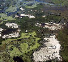 Floodplains of the Okavango from the air by nymphalid