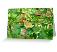 Dogface Butterfly on Pokeweed Greeting Card