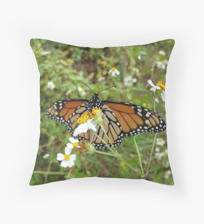 Monarch on Bidens alba Throw Pillow