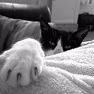 My big Paw by stellaozza