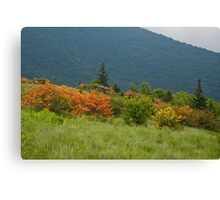 Flame Azaleas and Mountains Canvas Print
