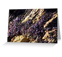 Mussels On Rocks Greeting Card