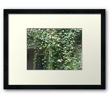 Cascading Albertine Rose Framed Print