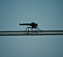 Walking On Wire by terrebo