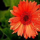 Big Orange Flower by terrebo