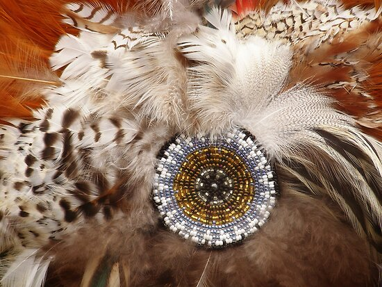 Feathers by Judith Hayes