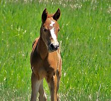 Pebbles--two week old filly by Fareday