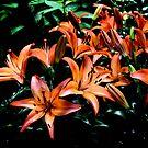 Lillies by Dan Shiels