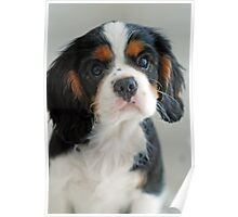 Adorable Louie Poster
