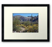 Tucson Desert Framed Print