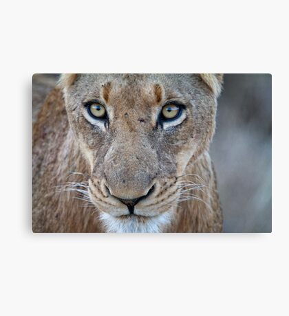 Looking Into Your Soul Canvas Print
