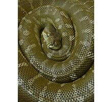 Curled Up Snake Photographic Print