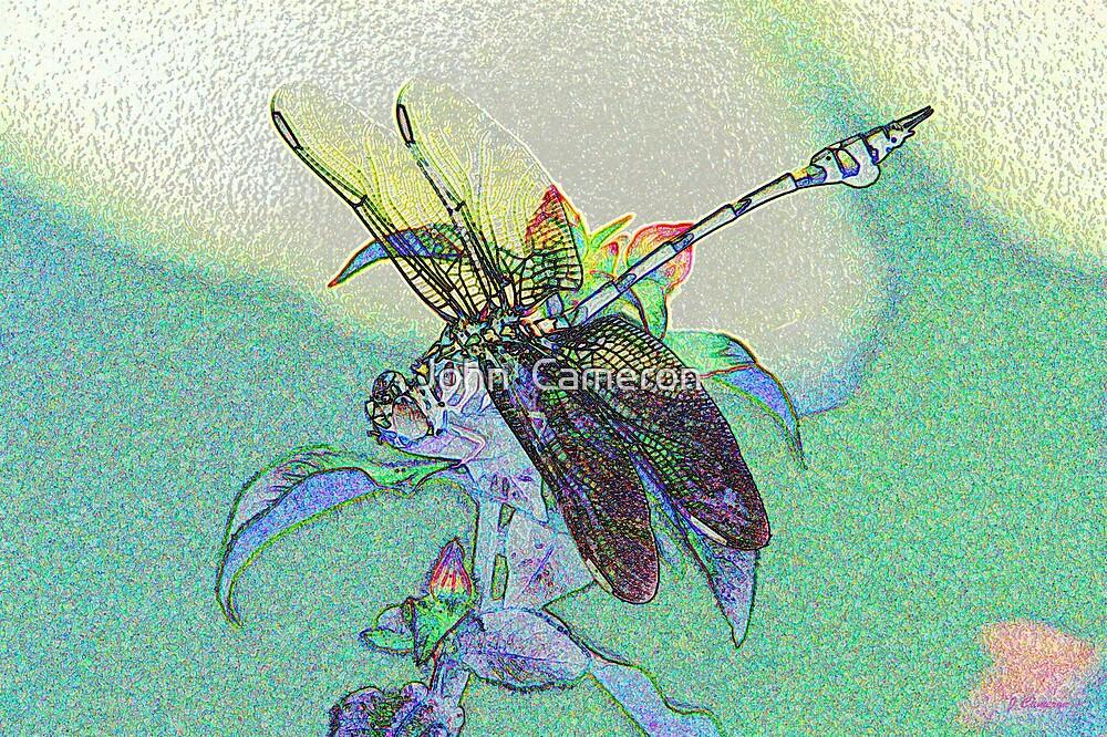 colourful macro dragonfly on leaf  by John  Cameron