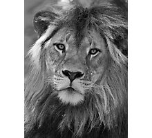 Big Cat Stare Photographic Print