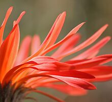 On Fire by Susan Brown