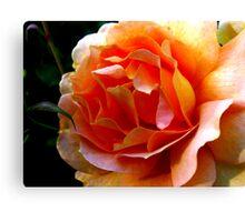 Orange Rose Close Up Canvas Print