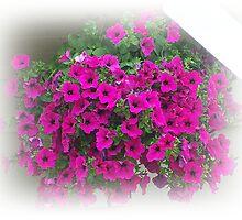 Petunias by Jonice