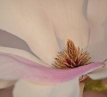 Magnolia Macro - Heart Center by Poete100