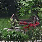 Flower Gardens by mltrue