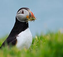 Grass Cutting Puffin by Welshpixels