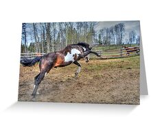 Spirited Pinto Stallion Equine Action Photo Greeting Card