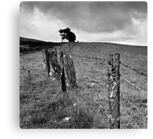 The Ochil Series - Winds and Fences Canvas Print