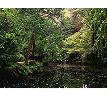 Nicholas Gardens Photographic Print