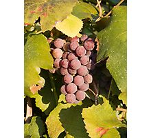 A Vineyard Delight Photographic Print