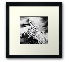 about the fern Framed Print