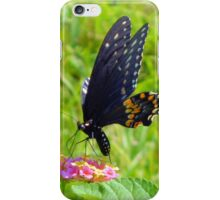 The Pipevine Swallowtail Butterfly iPhone Case/Skin
