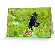 The Pipevine Swallowtail Butterfly Greeting Card