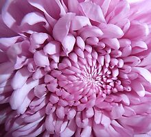 The very best of  Pink by JuliaWright