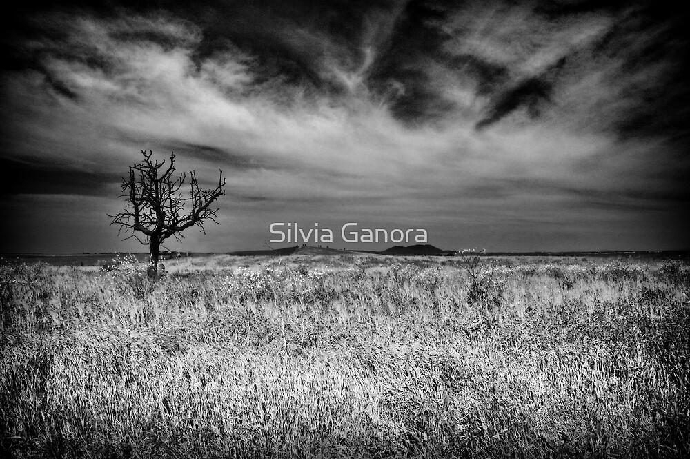 Bare tree by Silvia Ganora