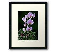 Purple Orchids on Green Framed Print