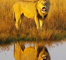 Roaring Reflection by Riaan van der Merwe