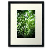 Bamboo Forrest Framed Print