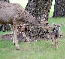 Bambi Twins  by Judy Grant