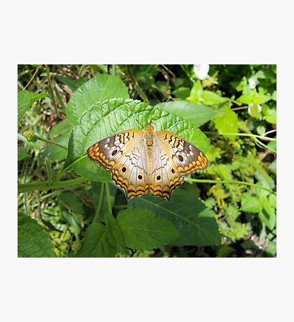 Butterfly 2 Photographic Print