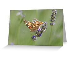 Butterfly........ Greeting Card