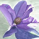 Blue Clematis by fesseldreg