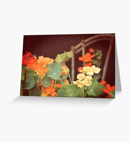 Vintage Nasturtiums Greeting Card