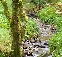 woodland stream by Mike Finley