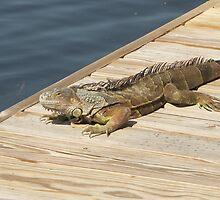 Iguana Grande by Bob Hardy
