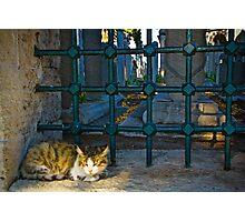 The Graveyard Cat Photographic Print