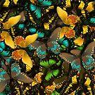 Butterflies by Dave Moilanen