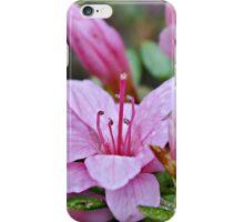 Pink Azaleas in the Garden iPhone Case/Skin