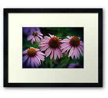 Pink Cone Flower Group Framed Print