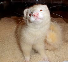 Ferret Smiling in Rice by Fennic