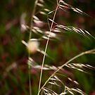 Flower #2 by rtuttlephoto